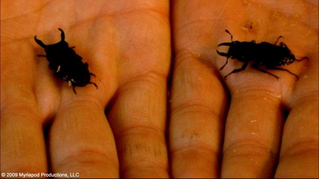 20100526.02.beetlequeen.jpg