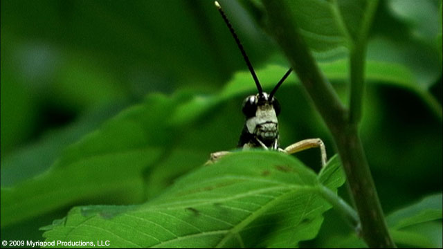 20100526.05.beetlequeen.jpg